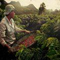 برترین کشورهای تولید کننده قهوه کدامند؟
