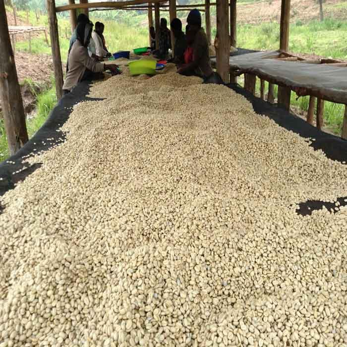قهوه تک خاستگاه رواندا Karamba اسکای لب