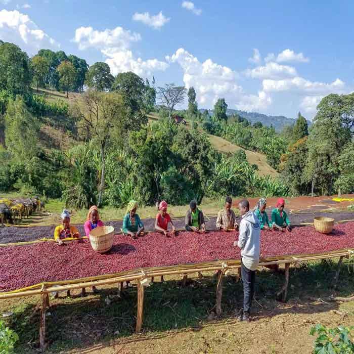 قهوه تک خاستگاه اتیوپی یرگاچف KOCHERE اسکای لب